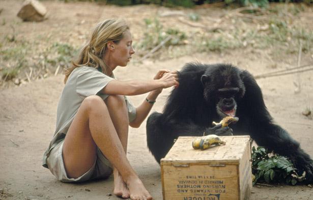 A Jane Goodall
